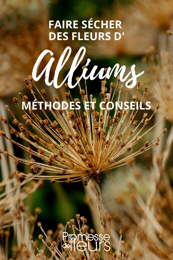 comment sécher des alliums ? nos conseils