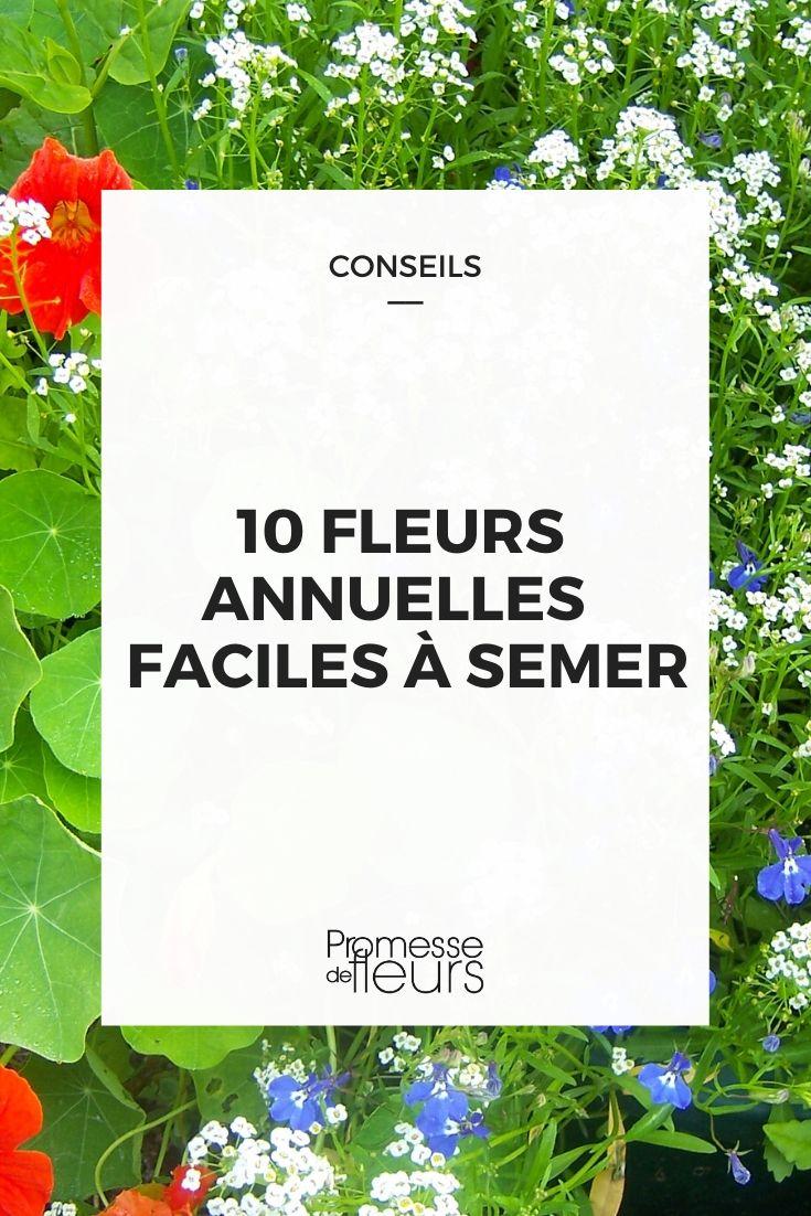 10 fleurs annuelles faciles à semer
