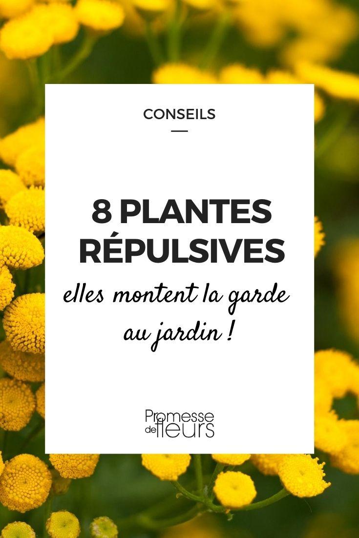 8 plantes répulsives
