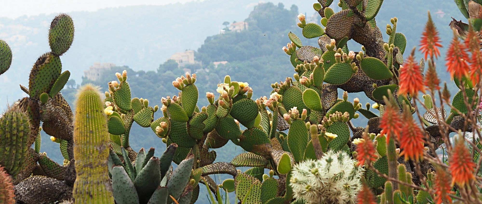 Cactus : où et comment les planter au jardin