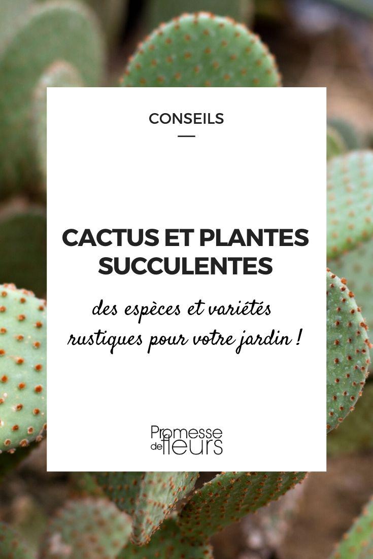 Cactus et plantes succulentes pour le jardin