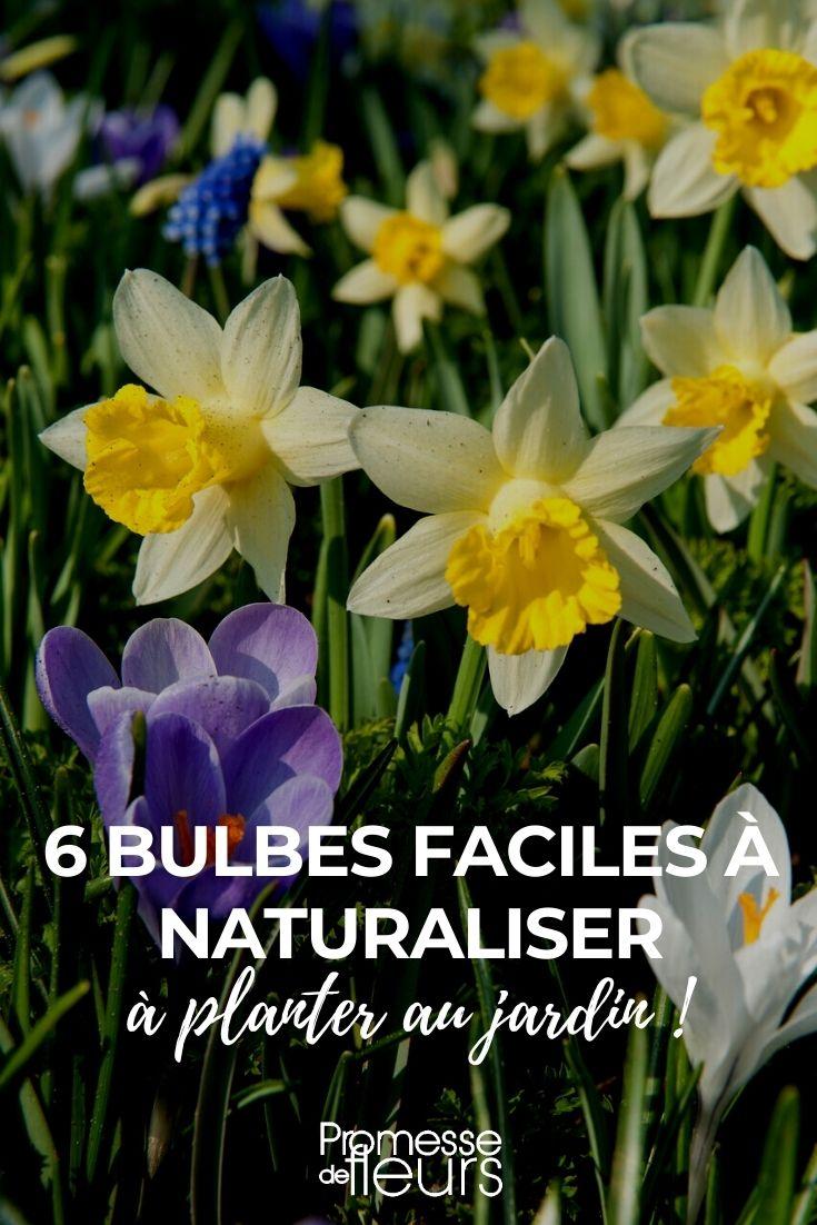 Notre sélection de 6 bulbes faciles à naturaliser au jardin