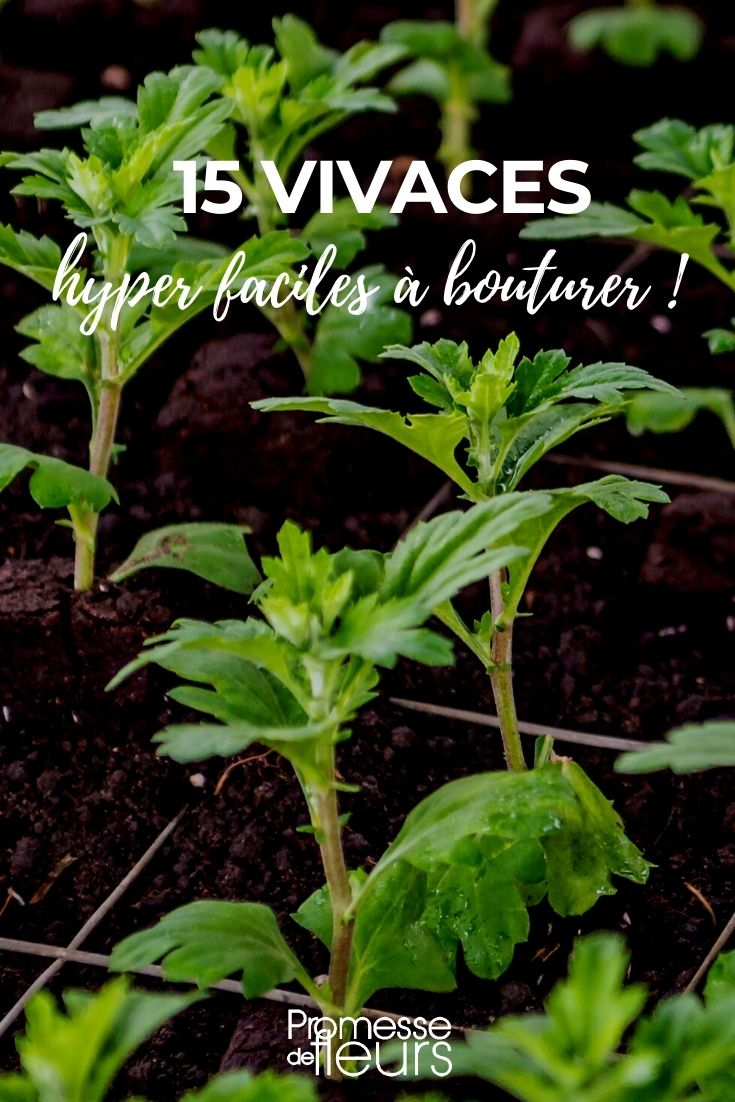 Notre sélection de 15 plantes vivaces très faciles à bouturer