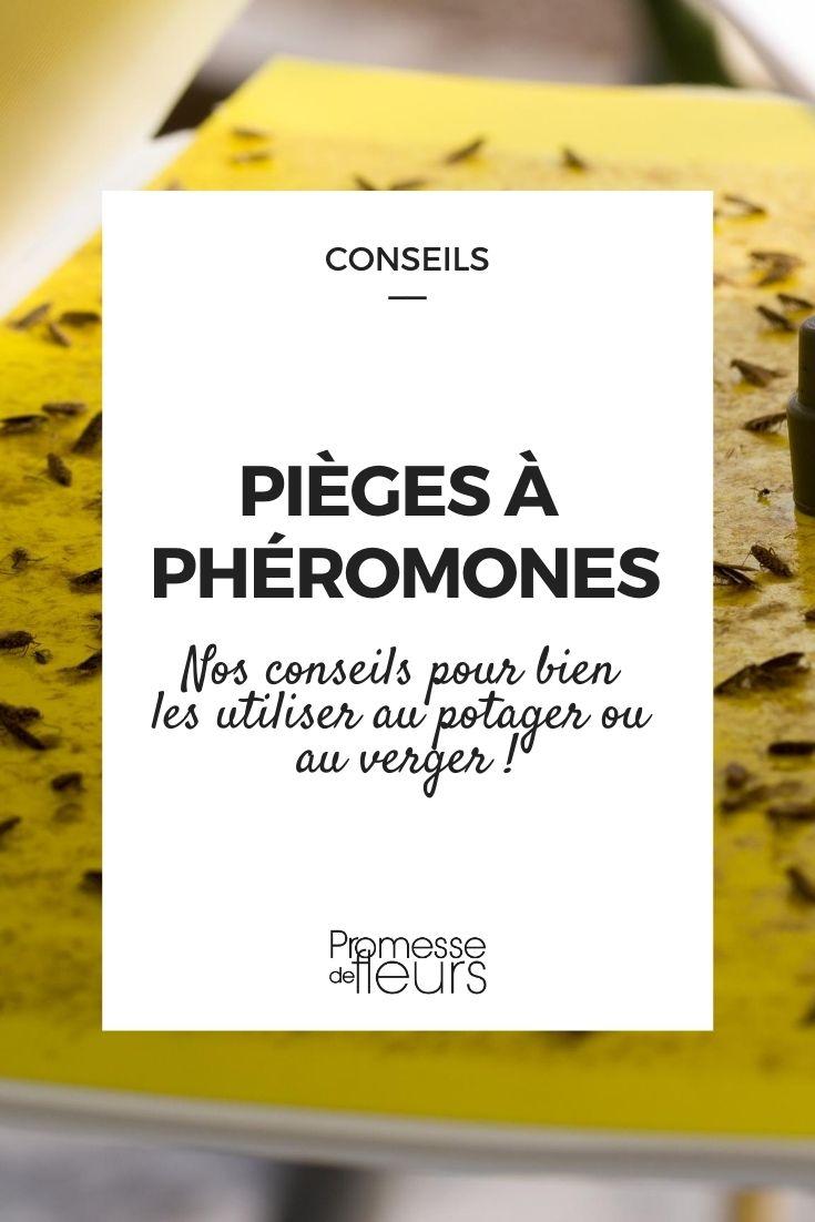Piège à phéromones