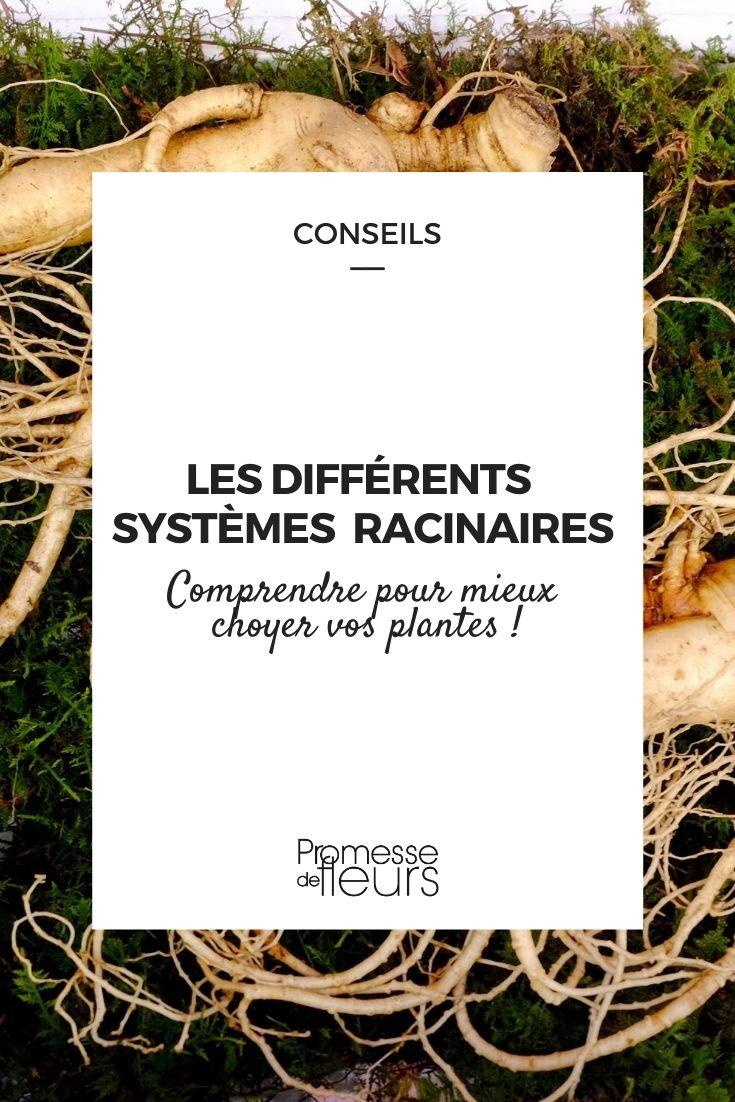 Les racines des plantes