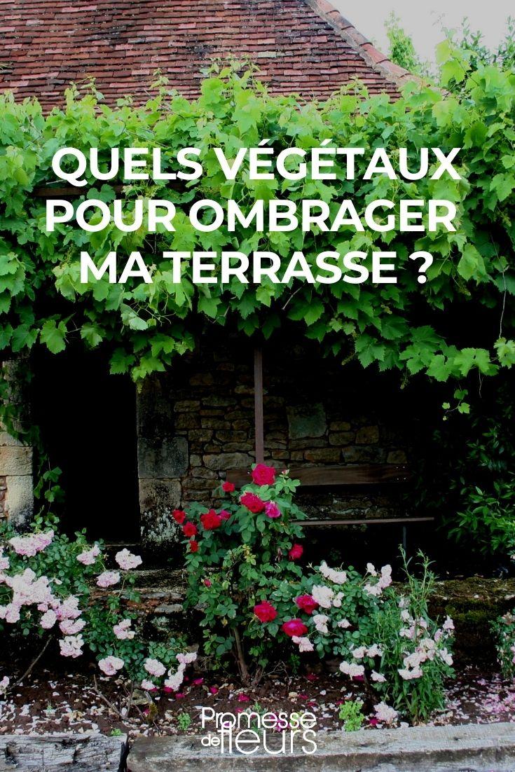 ombrage terrasse _ quels végétaux choisir ?