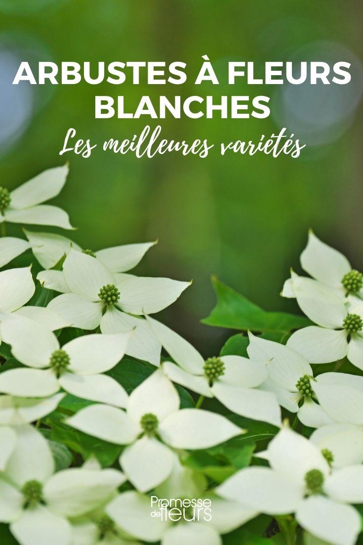 Les meilleurs arbustes à fleurs blanches