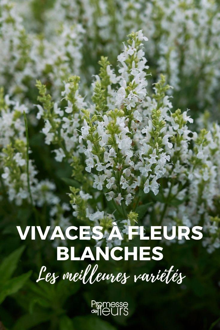 Les meilleures vivaces à fleurs blanches