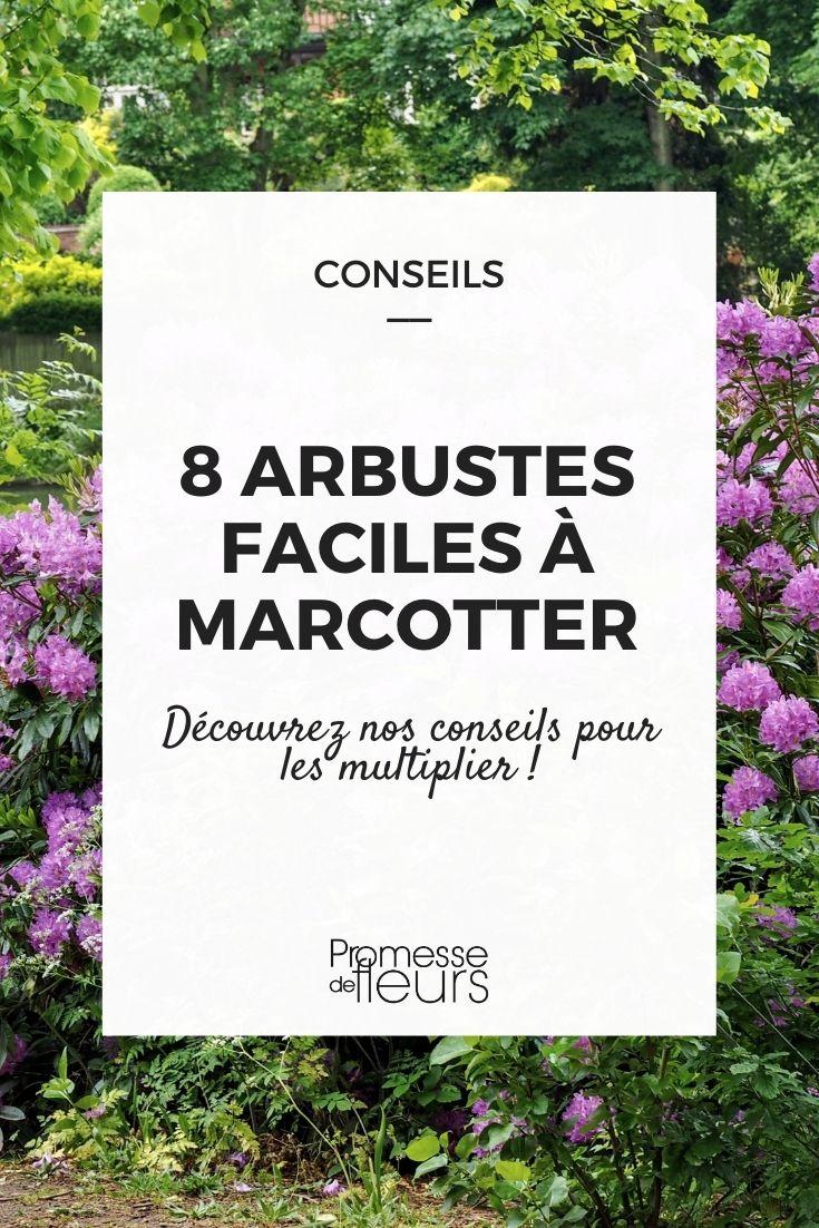 8 arbustes faciles à marcotter