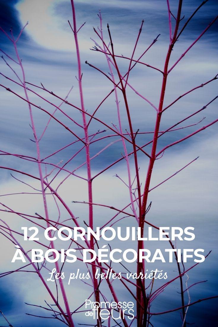 12 cornouillers à bois décoratif