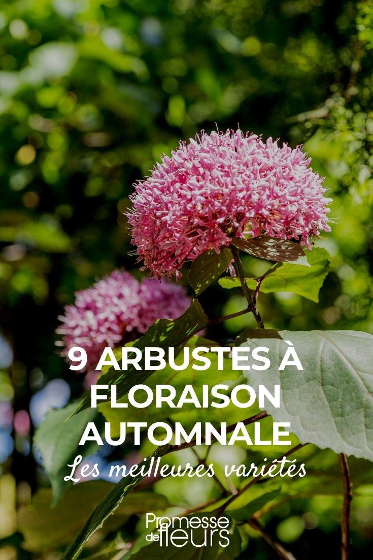 9 arbustes à floraison automnale
