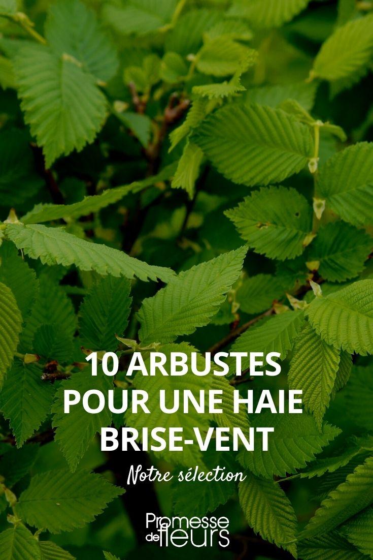 10 arbustes pour une haie brise vent