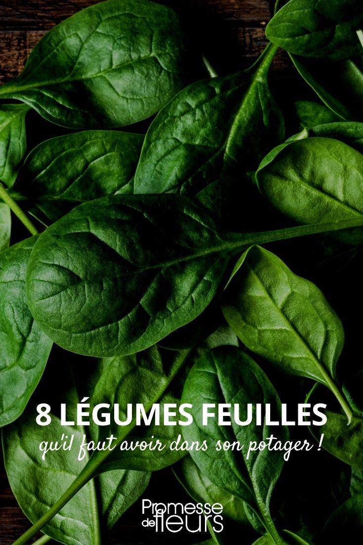 8 légumes feuilles