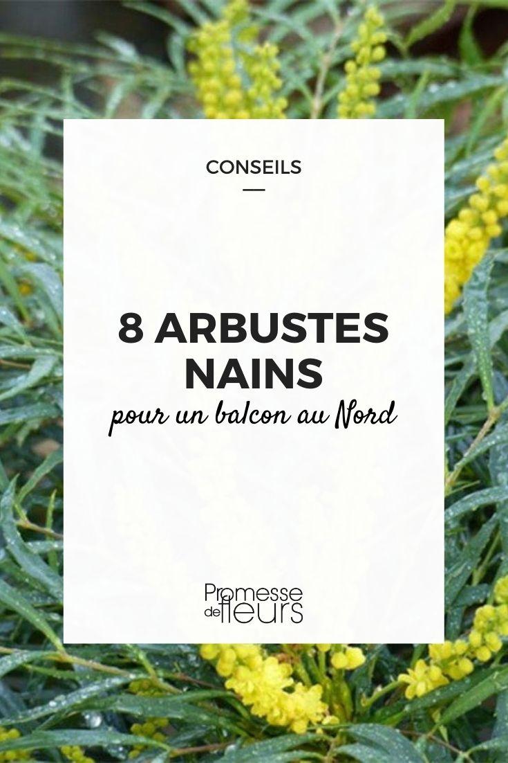 8 arbustes nains pour balcon nord