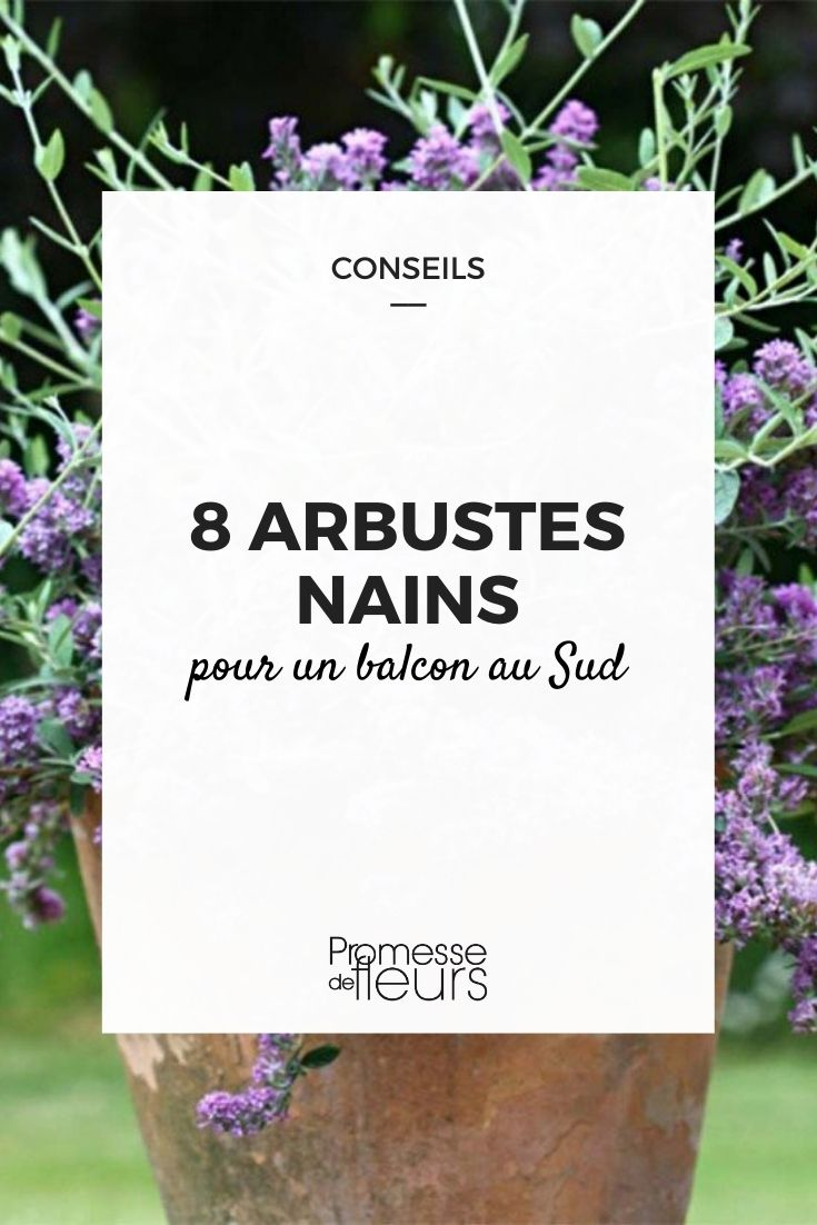 8 arbustes nains pour balcon sud
