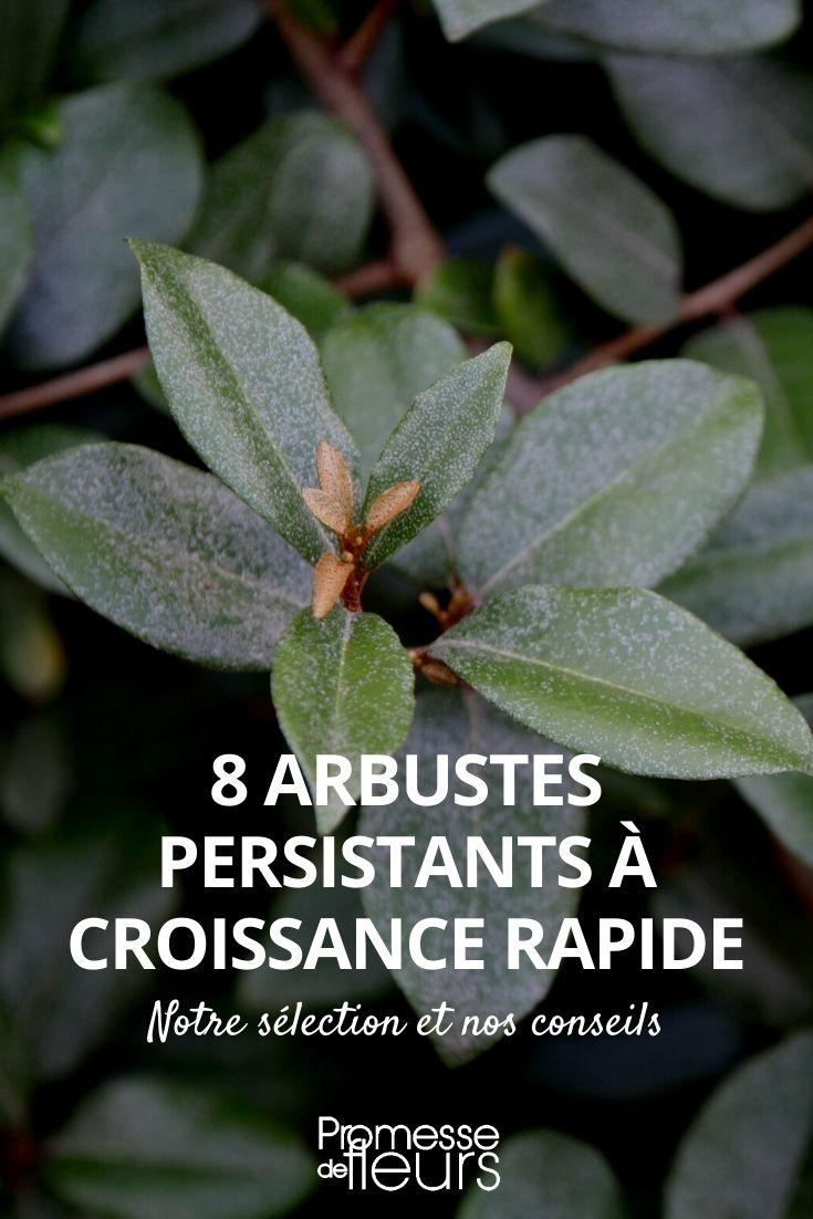 8 arbustes persistants qui poussent vite