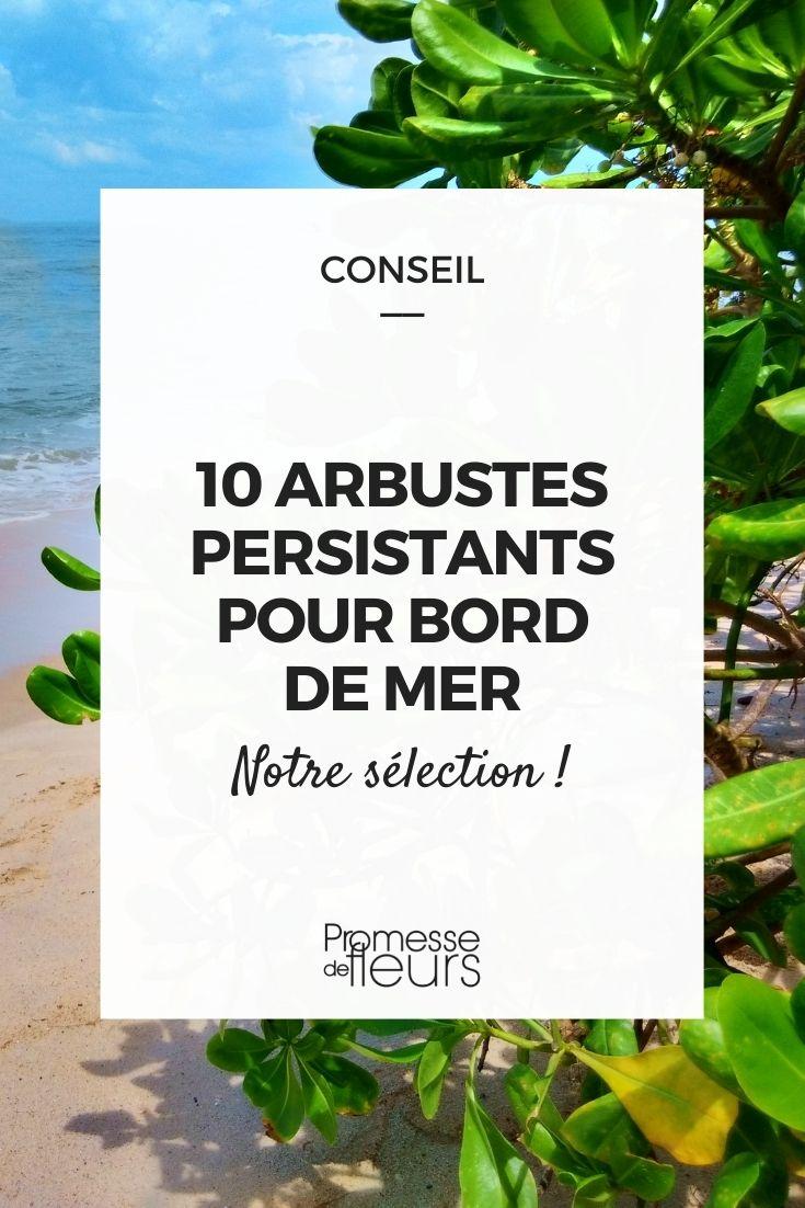 Bord de mer : 10 arbustes persistants adaptés