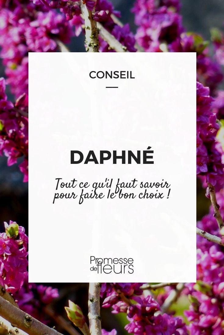 daphne choisir