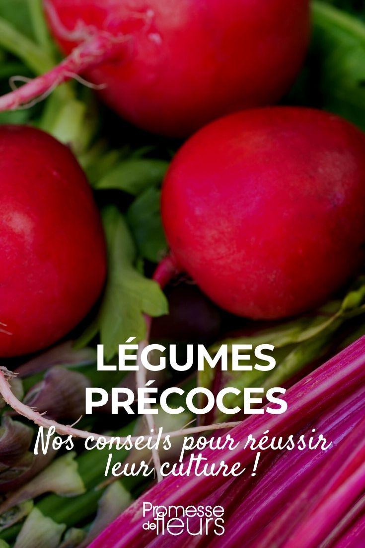 cultiver des légumes précoces