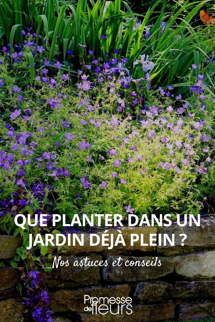 quelles plantes pour un jardin déjà plein ?
