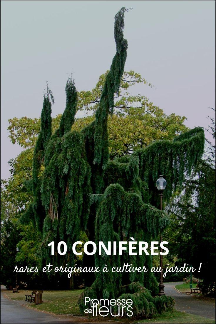 10 conifères rares et originaux pour jardin atypique