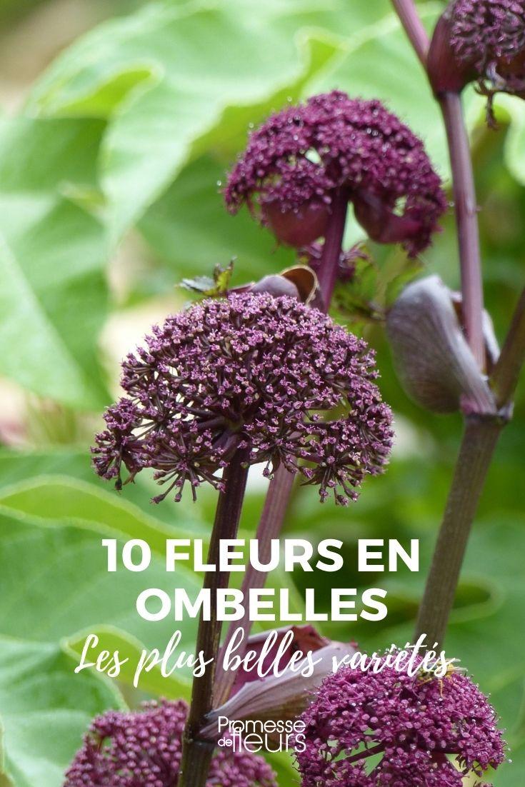 10 fleurs en ombelles