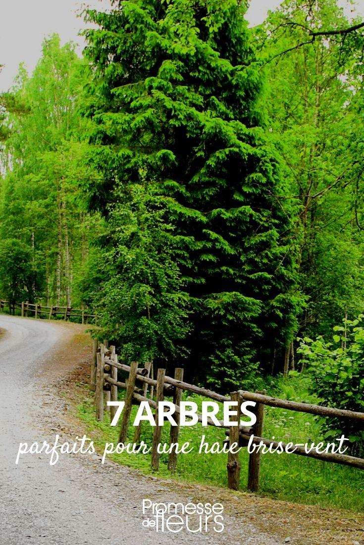 7 arbres pour haie brise-vent
