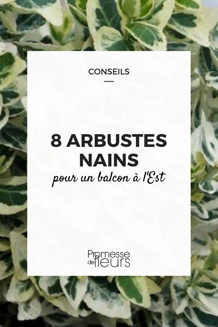 8 arbustes nains pour balcon est