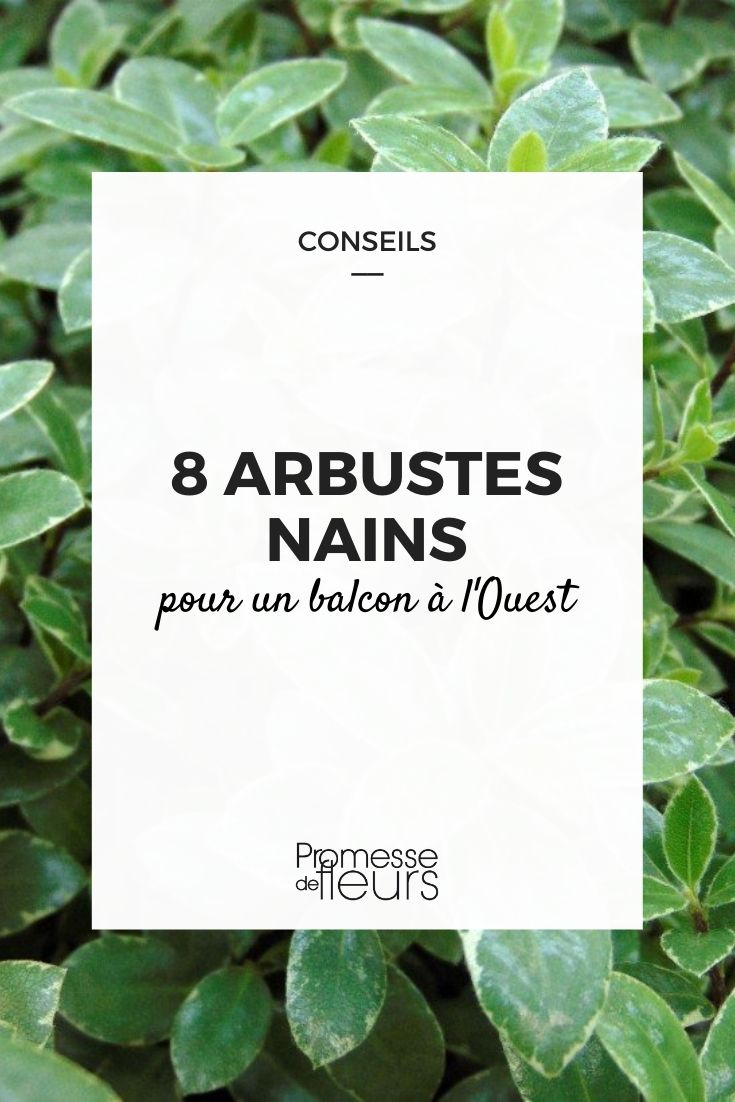 8 arbustes nains pour balcon ouest