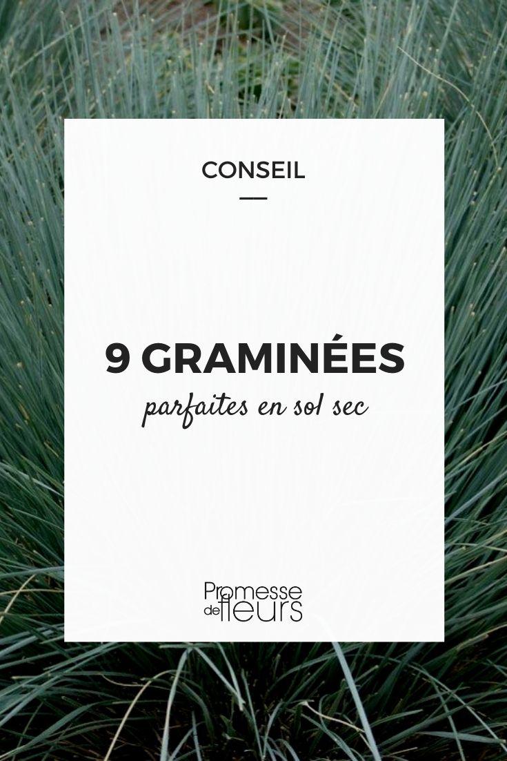 9 graminées pour sol sec