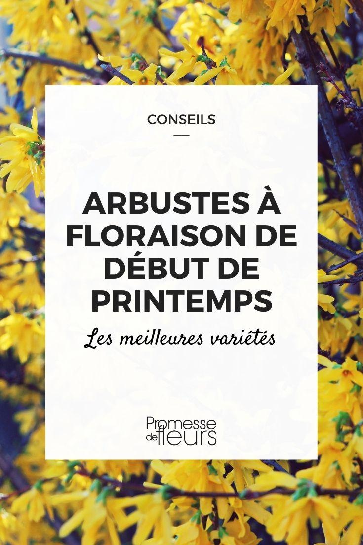 arbustes floraison debut printemps