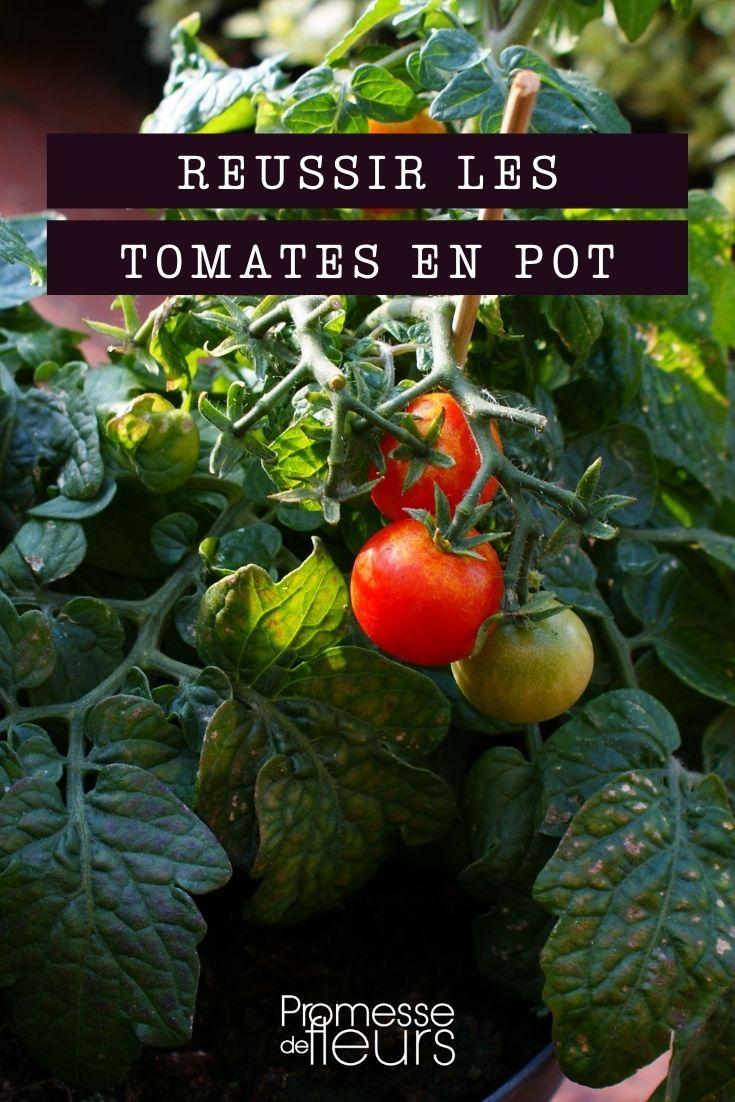 réussir la tomate en pot