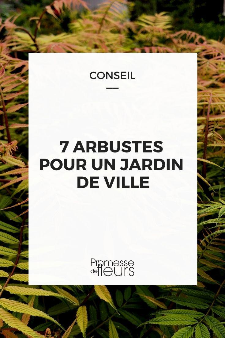7 arbustes pour jardin de ville