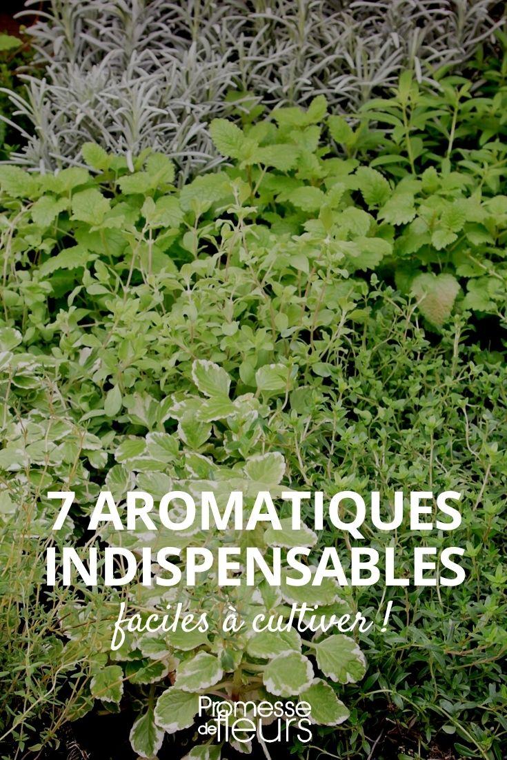 7 aromatiques indispensables