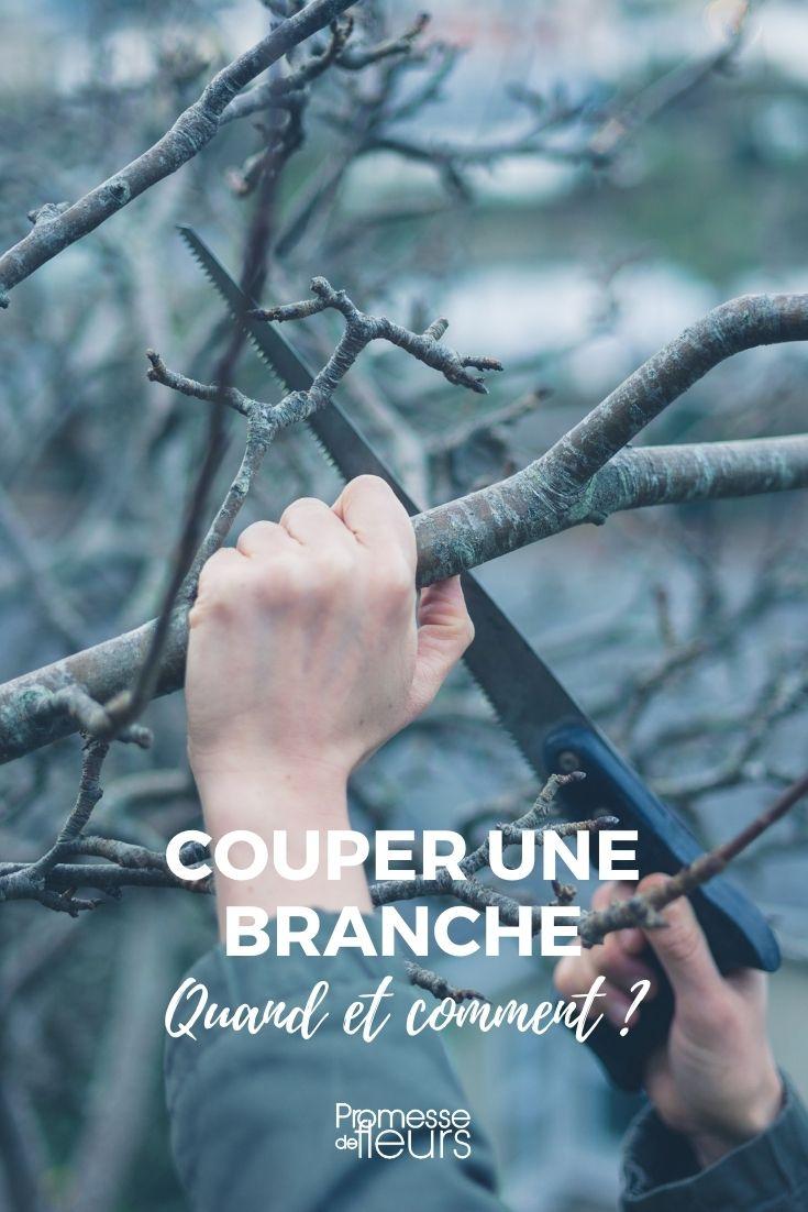 elaguer, couper une grosse branche d'arbre