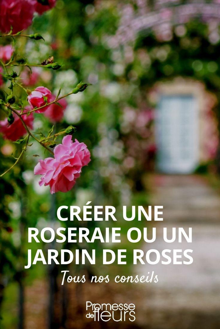 créer une roseraie ou une jardin de roses