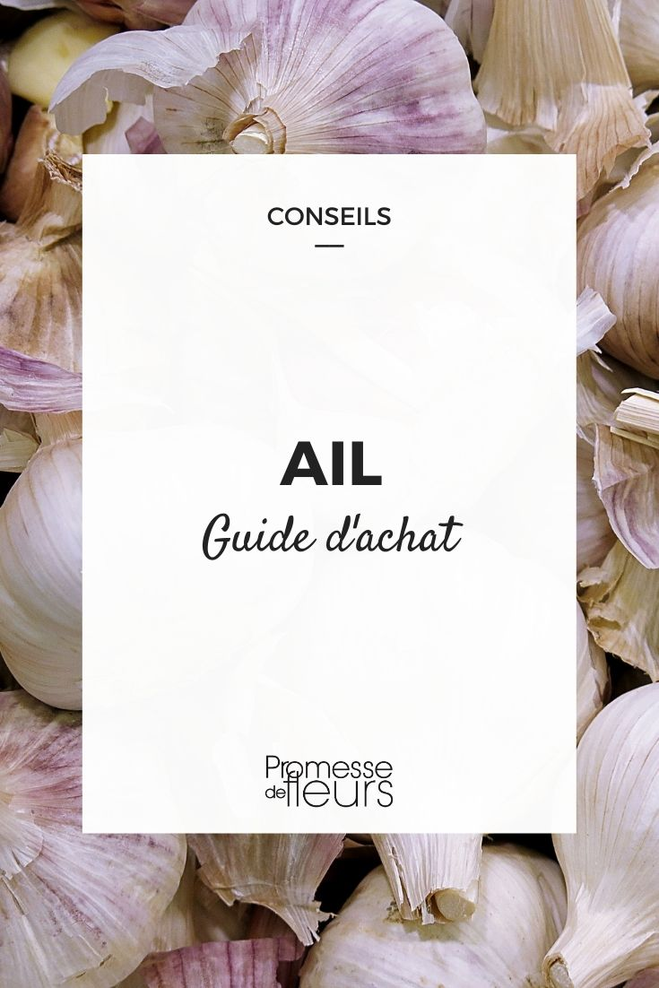 ail guide d'achat