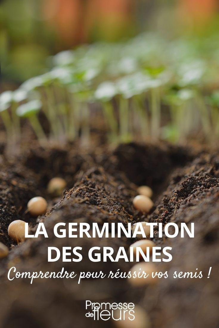 germination des graines
