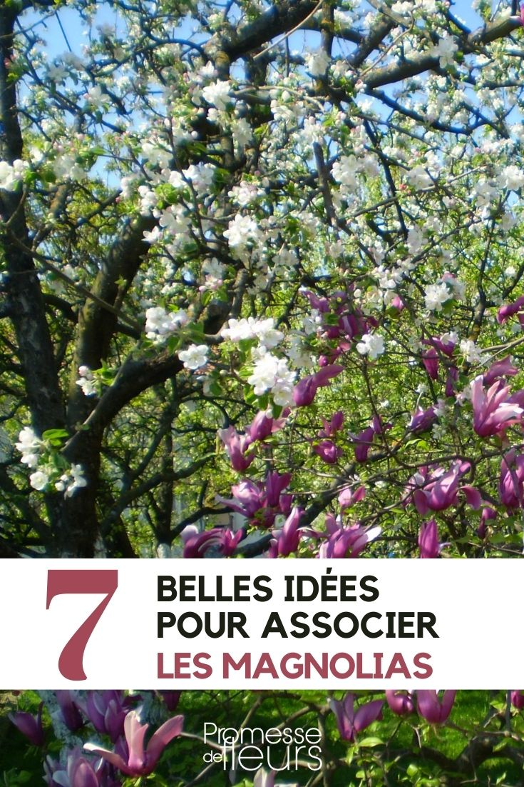 magnolia : 7 idées d'association