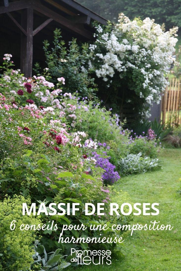 6 conseils pour faire un beau massif de roses
