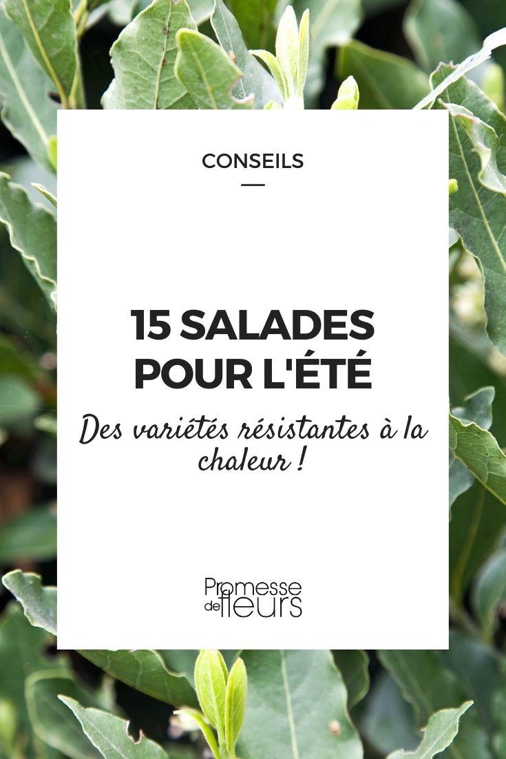 Sélection de salade résistantes à la chaleur