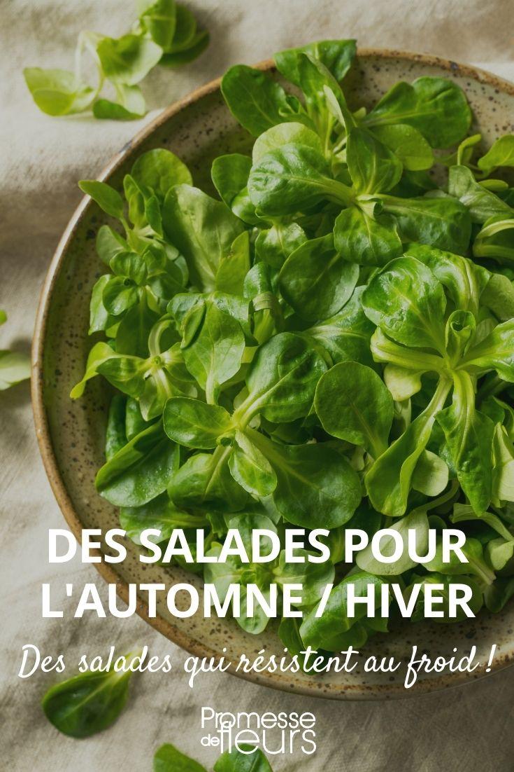 salades pour l'automne et l'hiver