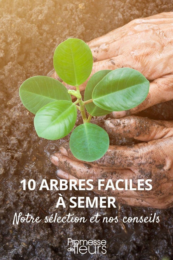 10 arbres faciles à semer