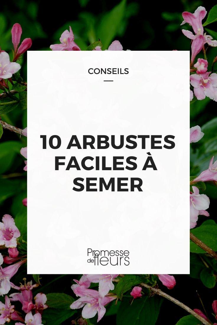 10 arbustes faciles à semer