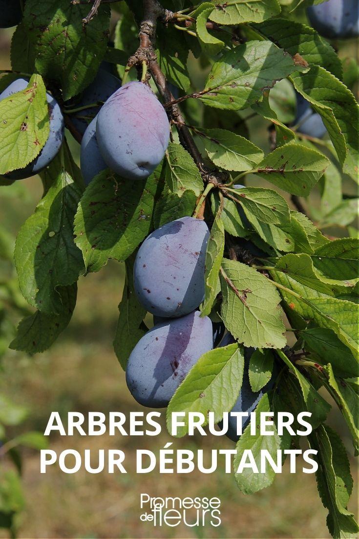 arbres fruitiers pour débutants