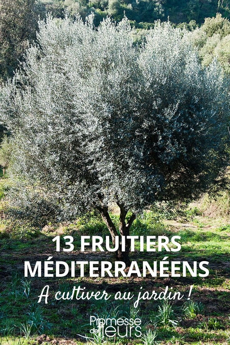 13 arbres fruitiers méditerranéens