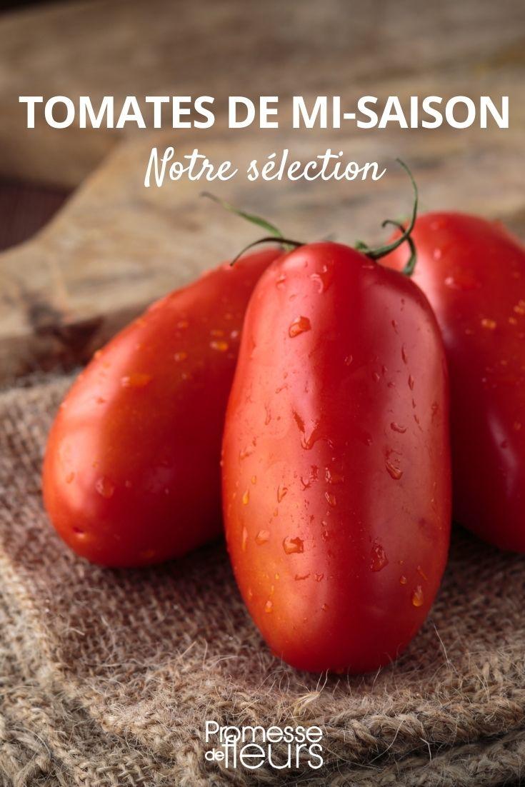 sélection de tomates de mi-saison
