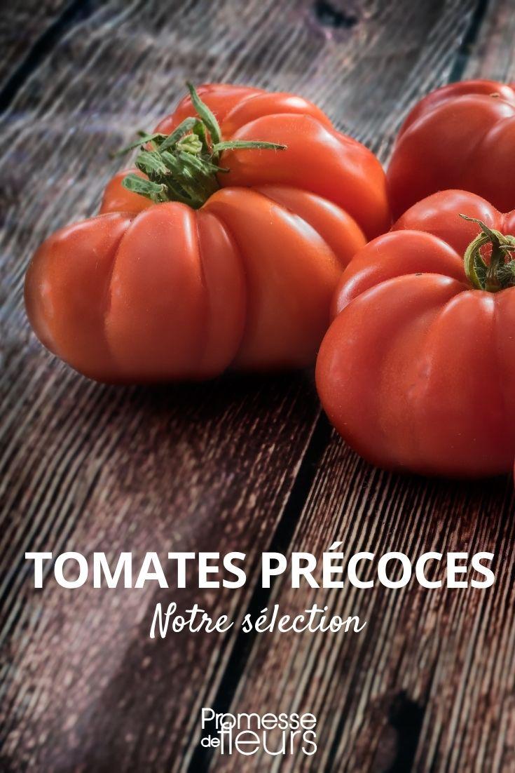 Sélection de tomates précoces
