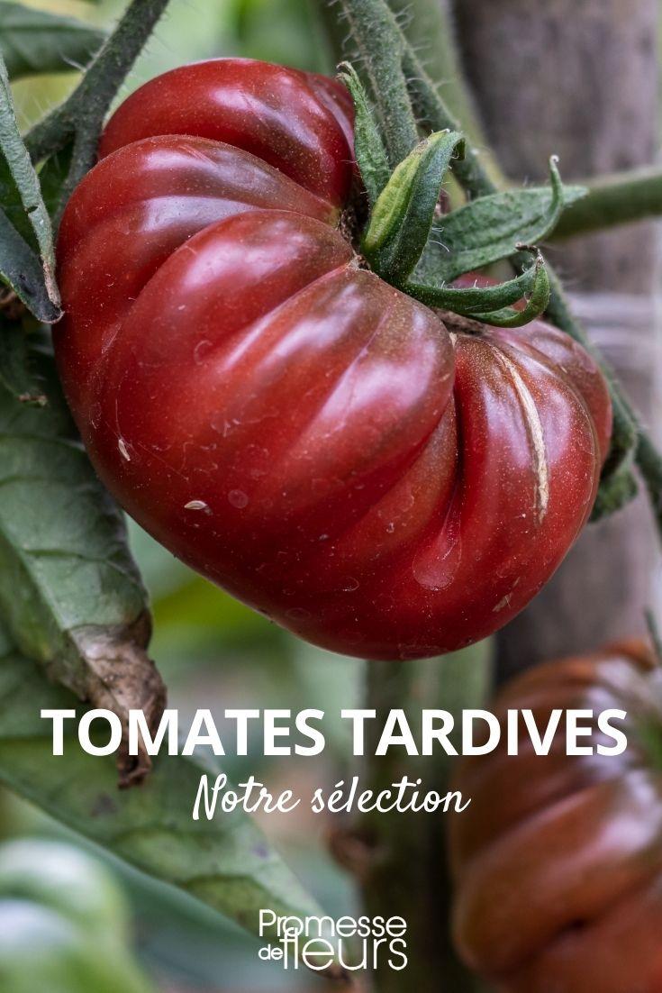 notre sélection de tomates tardives