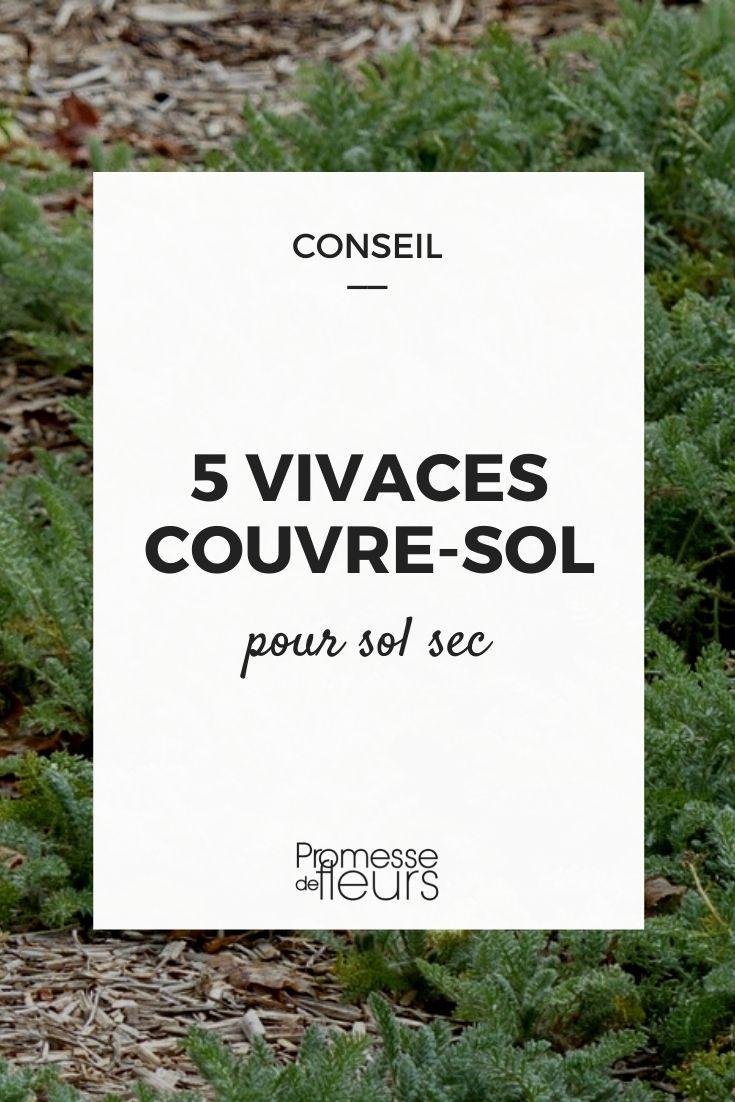 vivaces couvre-sol terre seche